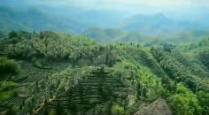 《六安瓜片之歌》MV