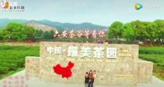 最美茶乡,千人茶山表演美翻天
